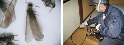 シロアリ・木材害虫画像