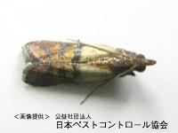 食品害虫対策