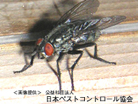 ハエ・蚊対策